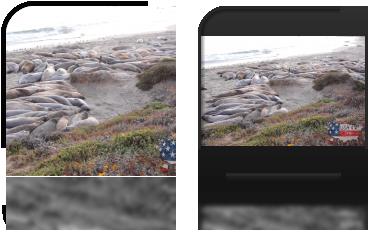 Słonie morskie na plaży niedaleko San Simeon