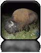 Co prawda niedźwiadków nie spotkaliśmy, ale pod koniec dnia trafiliśmy na stado bizonów żerujących tuż przy drodze